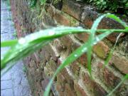Il verde luccichio